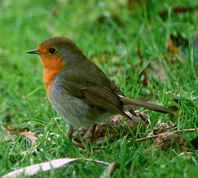 vogels voeren en beloeren
