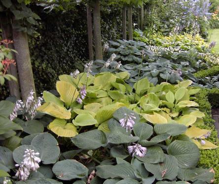 vaste planten die goed gedijen in de schaduw