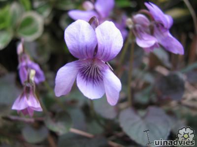 Vaste planten die goed groeien in de schaduw op een droge bodem