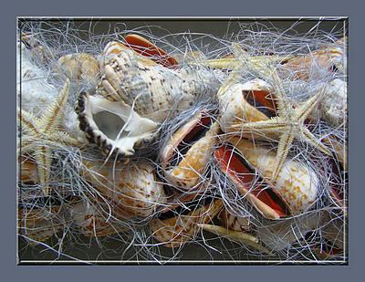 Guirlande Knutselen Met Schelpen Als Decoratie Met Soorten Schelpen Van Strand En Zee Creatief Met Schelpen Knutselen