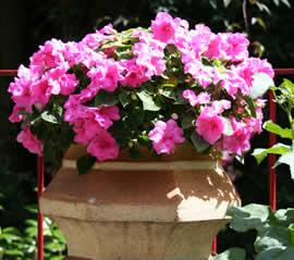 bloemen in bloembak