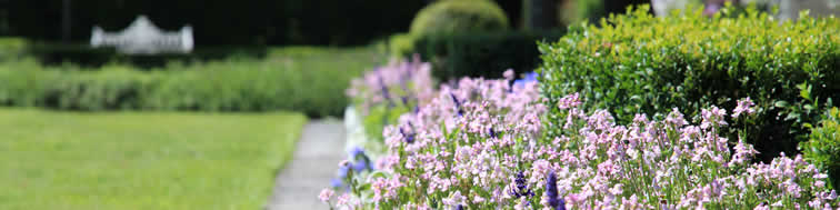 bloeiende bloemenborders