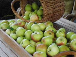 Appels oogsten