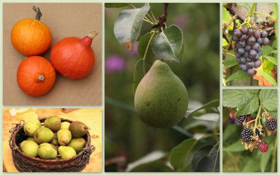 Fruittuin in Oktober