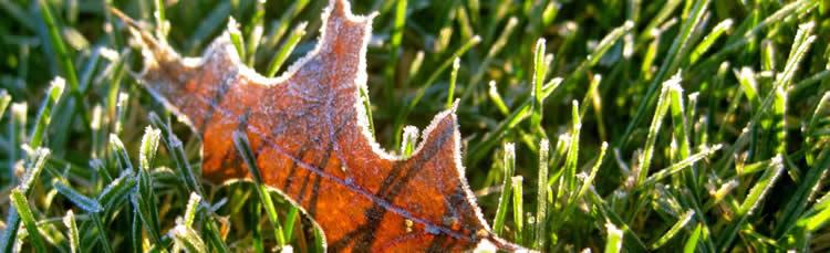 tuinieren halverwege november