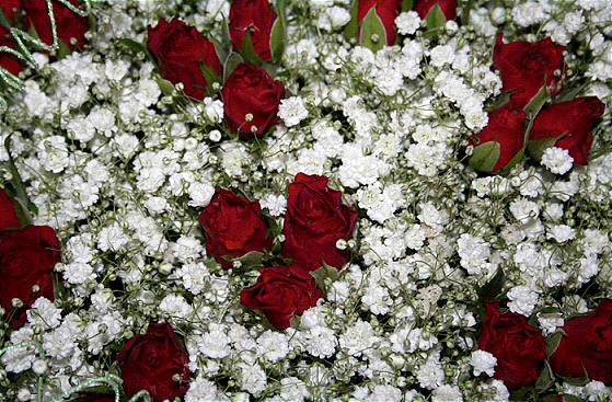 Rode rozen voor Valentijn in combinatie met gipskruid