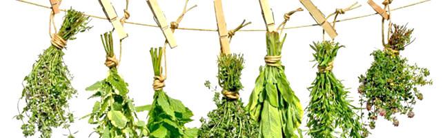 Fruit en groenten drogen - kruiden drogen
