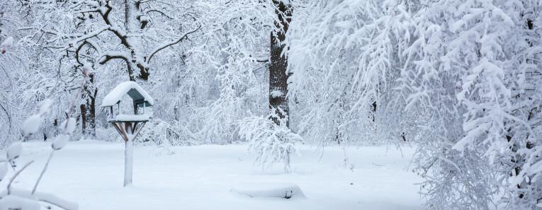 De tuin in een winters kleedje