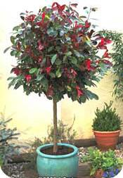 Boom In Pot Buiten.Struiken En Bomen Planten In Potten Voor Op Terras En Balkon
