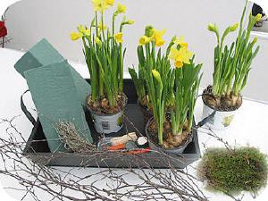 Bollen Bloeiend Voorjaar : Bloeiende bloembollen op een dienblad geschikt zorgen voor