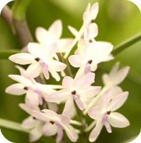 orchidee bemesten voedsel geven