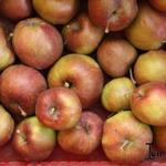 Malus domestica 'Jonagored' - Appel