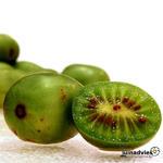 Actinidia arguta 'Geneva' - Kiwibes, minikiwi, kiwiberry - Actinidia arguta 'Geneva'