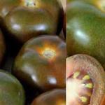 Lycopersicon lycopersicum 'Noir De Crimee' - Tomaat, zwarte tomaat - Lycopersicon lycopersicum 'Noir De Crimee'