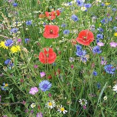 Aanleg gazon met lage bloemen