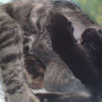 Chanou heeft kittens