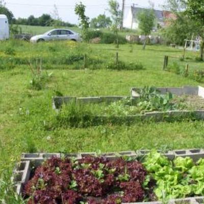 Grascompost gebruiken in de groententuin
