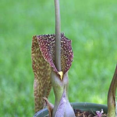 Enkele fotos van mijn bloeiende planten