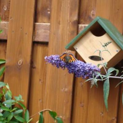 Vlinder fotos zet ze erbij