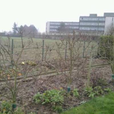 Fruitbomen of struiken