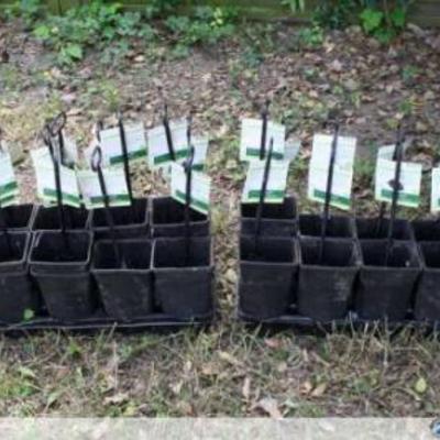 Gratis 23 langwerpige potten voor klimplanten