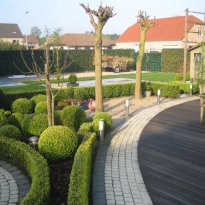 Terugsnoeien catalpa boomvorm