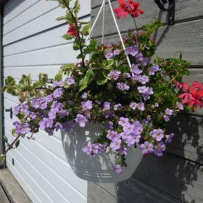 De naam van deze bloemen of plantjes