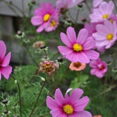 Kent iemand deze bloemen