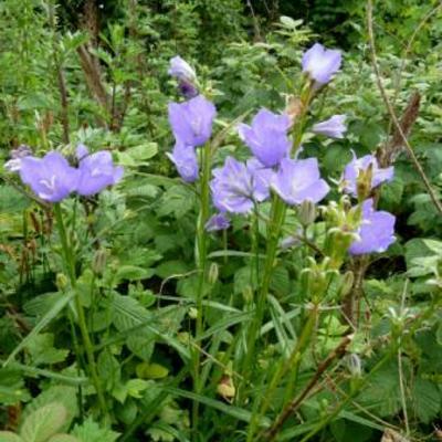 Wilde bloemen en planten