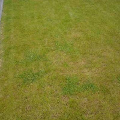 Bruine plekken in het gras