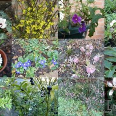 Wat bloeit er nog of al op 13 januari