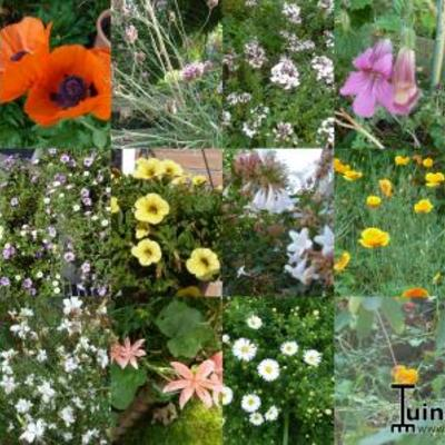 Bloemen in ons tuintje op 3 oktober