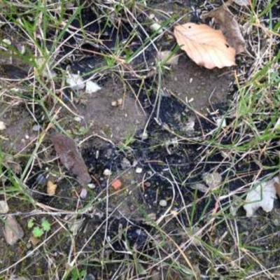 Zwarte plekken tussen gras