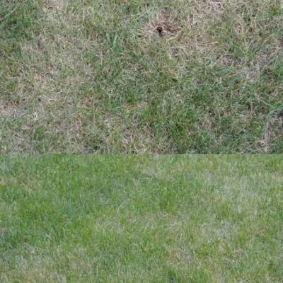 Voortuin met dor gras en plekken