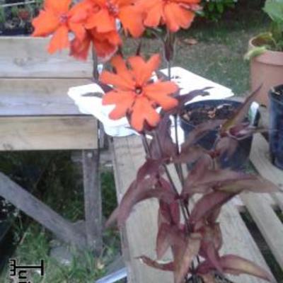 Welke plantje is dit en hoe plant  verzorg ik het