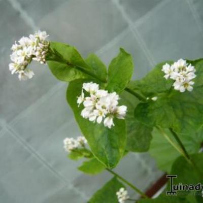 Witte onbekende bloemen