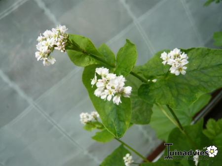 Super Witte onbekende bloemen #HZ82