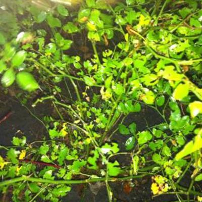Bladluis of Slakken op mijn rozen struik en Kornoeilje