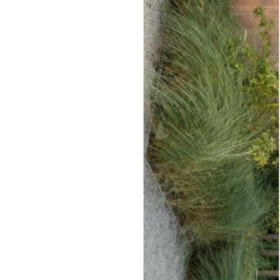 Welke grassoort
