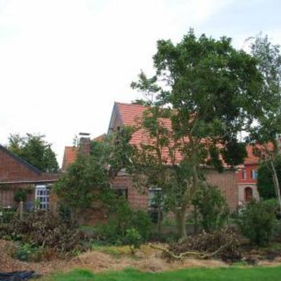 Bijsnoeien magnolia na storm