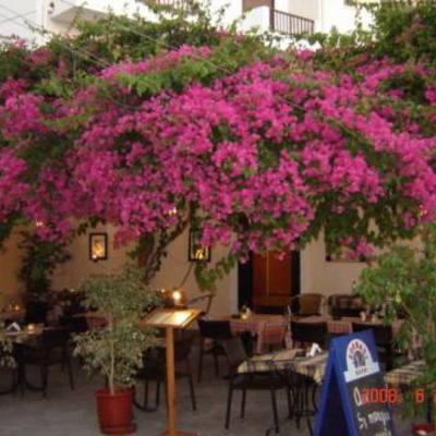 Bloemen Kreta