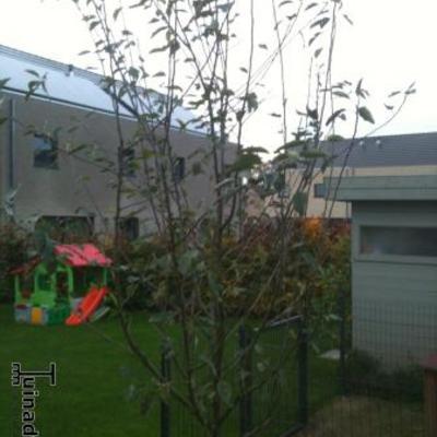 Nog een appelboom