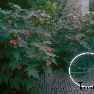 Wat voor bloemen zijn dit zie foto