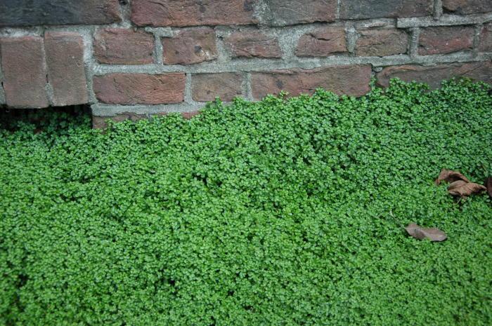 Slaapkamergeluk Plant : Plantenherkenner