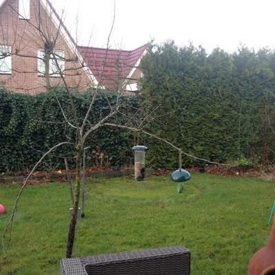 Snoeien appelboom Ecolette