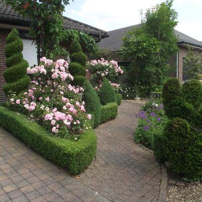 Open tuin the rosegarden