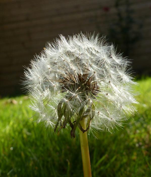 Foto uit de tuin van kroelie - Bijzonder tuinfoto ...