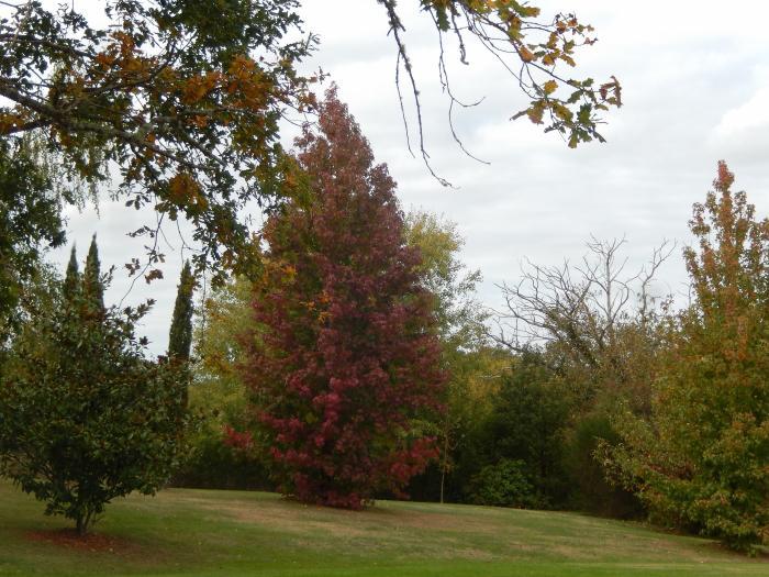 Foto uit de tuin van plume - Foto droge tuin ...