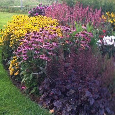 Planten die zowel tegen hitte als koude kunnen