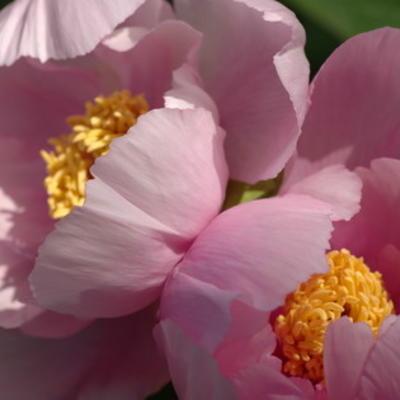Boompioendagen en start zomerbloemenverkoop bij Het Houten Huis.eu